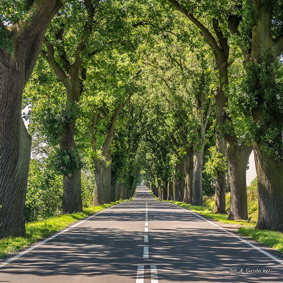 krajobraz droga wśród drzew